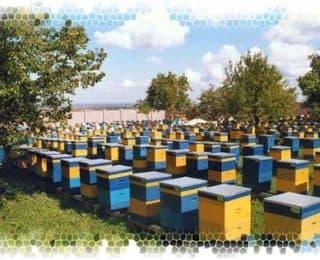 Пчеловодство для начинающих как избежать ошибок