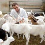 Пастбищное козоводство: как организовать выгодный бизнес