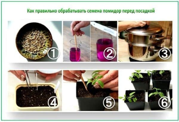 выращивание рассады томатов в домашних условиях