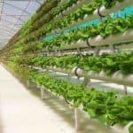 Как вырастить зелень на гидропонике в домашних условиях