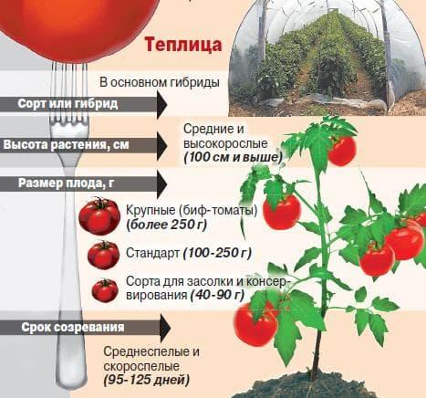как вырастить рассаду помидор в домашних