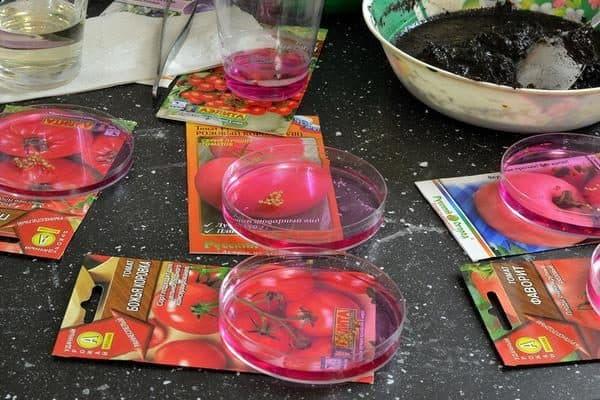 томаты лучшие сорта для открытого грунта