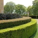 Многолетняя быстрорастущая живая изгородь: виды растений для создания зеленой стены