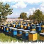 Рекомендации для начинающих пчеловодов, с чего начать разведение пчёл